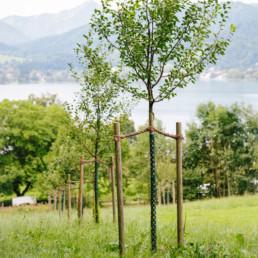Klee_Gartenbau_Obstbaumbepflanzung