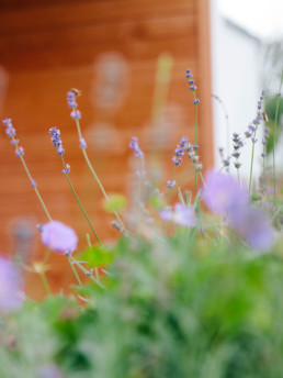 Klee_Landschaftsbau_Hinterwimmer_Lavendel